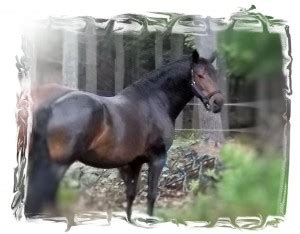 NUTRIENT DEFICIENCES | Training Horses … Naturally!