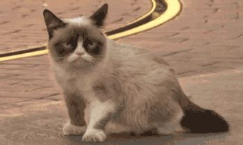 Cat Meow GIFs - Find & Share on GIPHY
