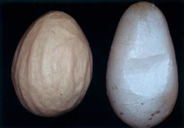 Egg Drop Syndrome (EDS) / Disease Informations / Poultry