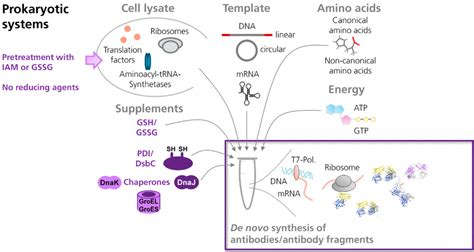 Antibodies   Free Full-Text   Cell-Free Synthesis Meets