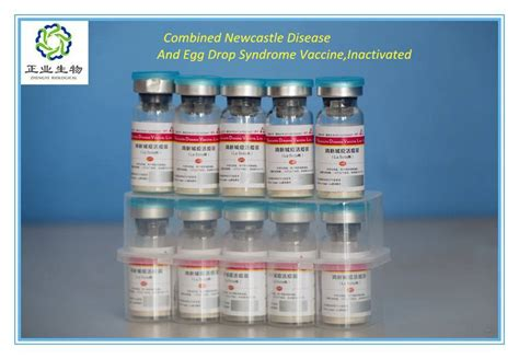 Combined Newcastle Disease And Egg Drop Syndrome Vaccine