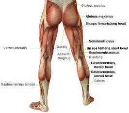Acute Hamstring Injuries | Sports Injury and Performance