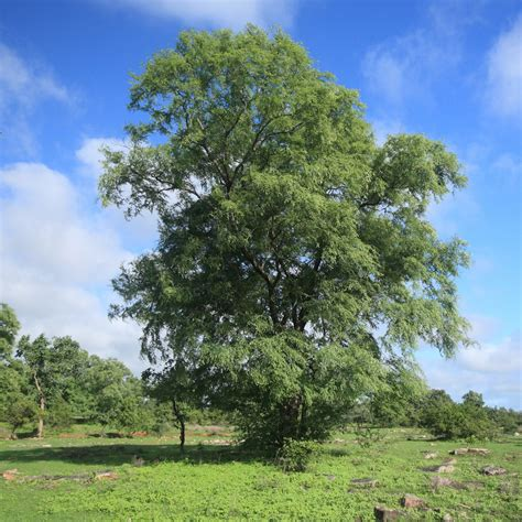 PHOTOS: Here Are 22 Of Delhi's Most Beautiful Native Trees