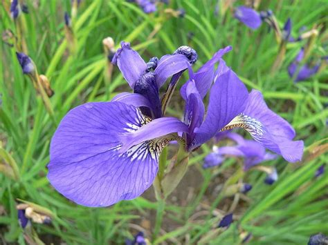 Meaning, origin and history of the name Iris - Behind the Name
