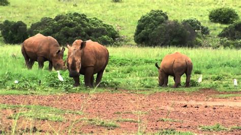 Rhino and Lion Nature Reserve - South Africa - YouTube
