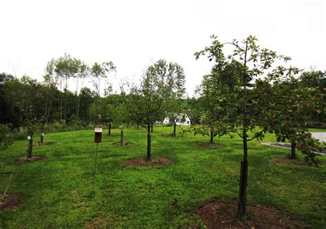 Fruit Tree Orchard and Berry Patch Installation - Natural